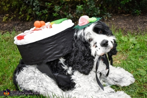 Sushi Roll Dogs Homemade Costume