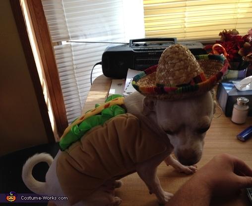 Taco Chihuahua Costume