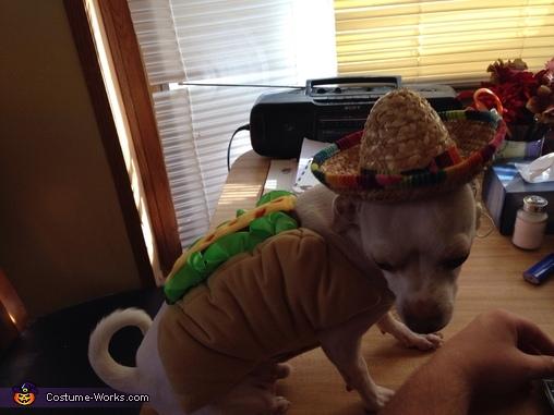 Taco chihuahua, Taco Chihuahua Costume