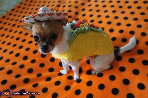 Kuri the Taco Dog, Taco Dog & Rodeo Cat Costume