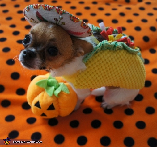 Kuri the Taco Dog, Taco Dog & Rodeo Cat Costume
