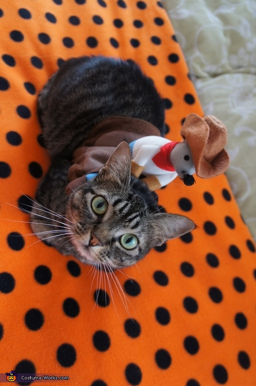 Azuki the Rodeo Cat, Taco Dog & Rodeo Cat Costume