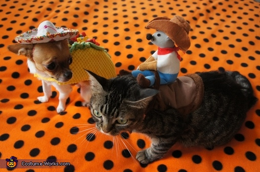 Taco Dog & Rodeo Cat Costume