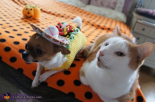with my cat brother ..., Taco Dog & Rodeo Cat Costume