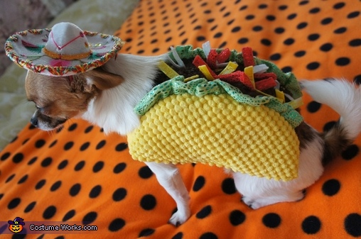 back style, Taco Dog & Rodeo Cat Costume