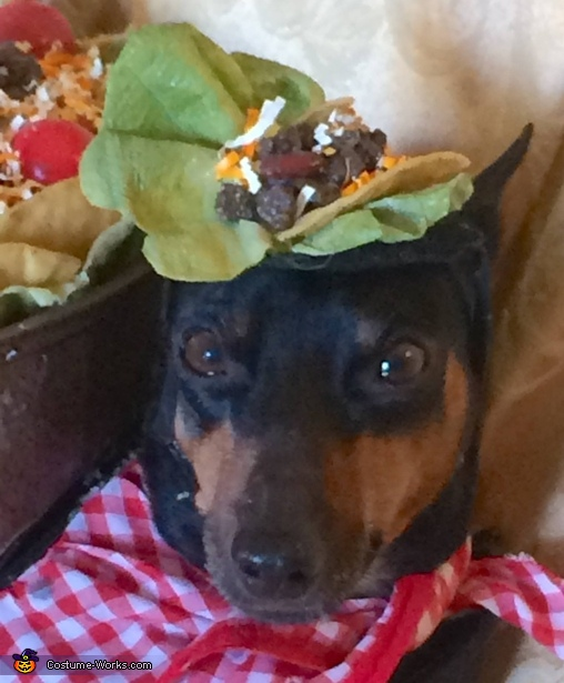 Matching taco hat, Taco Salad Dog Costume