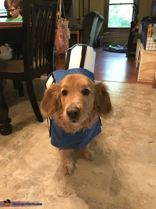 Tardis Dog Homemade Costume