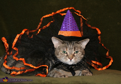 Witch Cat - Homemade costumes for pets