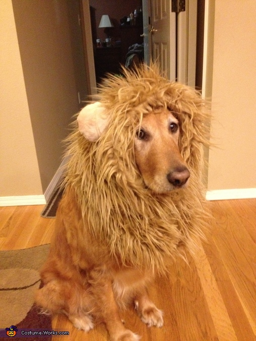 DIY Lion Costume http://www.costume-works.com/lion-2.html