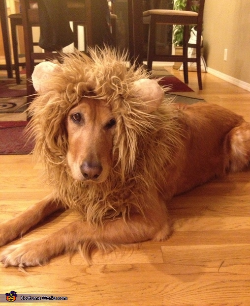 DIY Lion Costume http://www.costume-works.com/lion-3.html