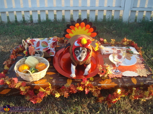 Image result for thanksgiving animals photos