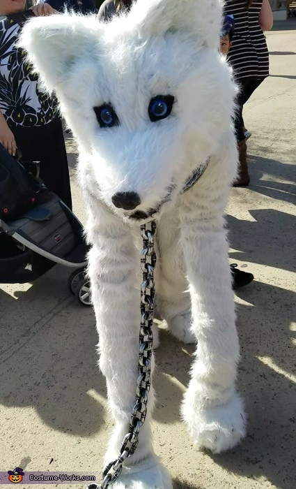 Face, The Arctic Wolf Costume