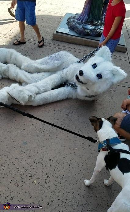 hello dog, The Arctic Wolf Costume