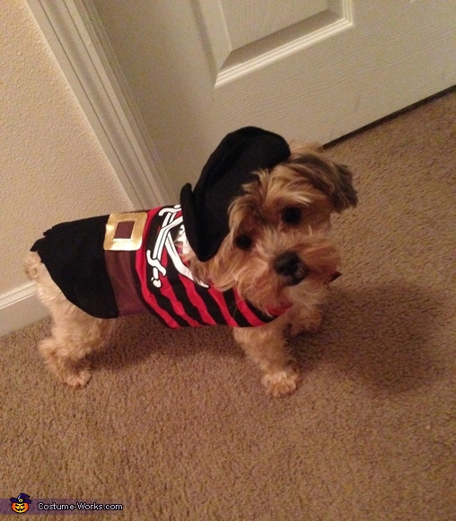 The Cutest Pirate Dog Costume