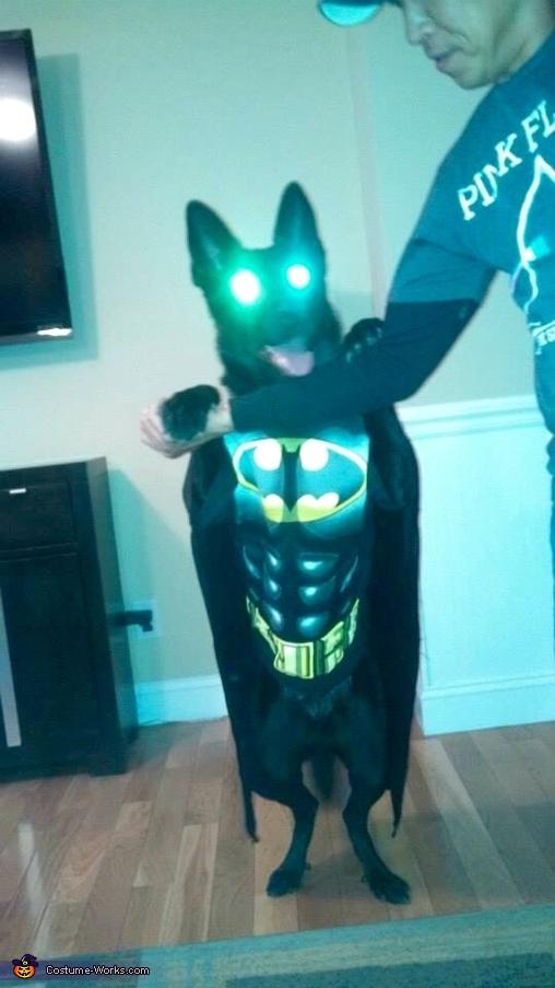 Now that's a huge Bat!, The Dark Knight Batman or Batdog Costume
