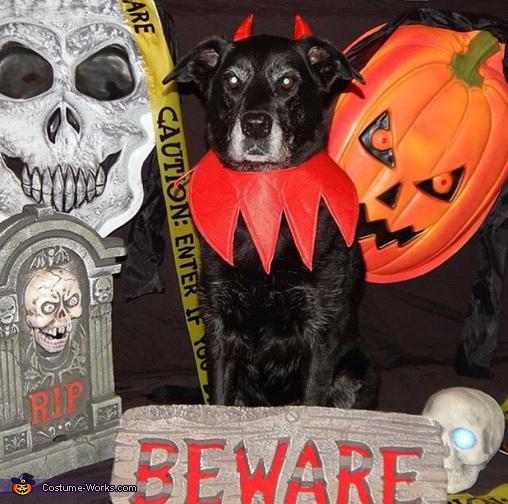 The Devil Dog Costume
