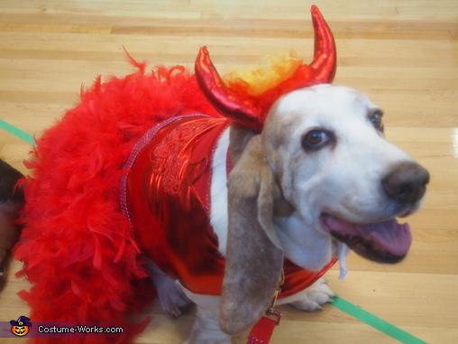 Lola-Devil wears Prada 4, The Devil Wears Prada Costume