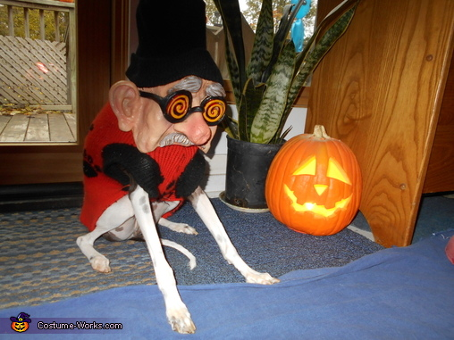 The IGnator Dog Costume