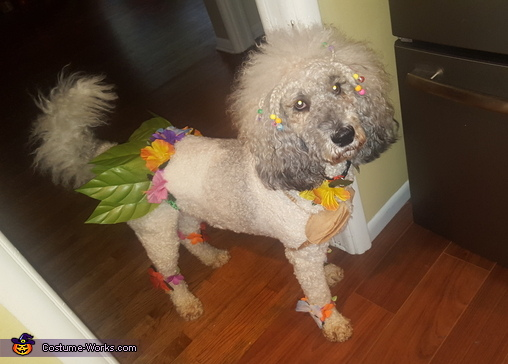 The Island Girl Dog Homemade Costume