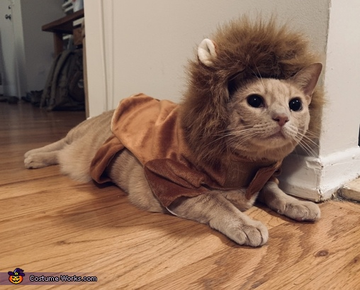 The Lion King Costume