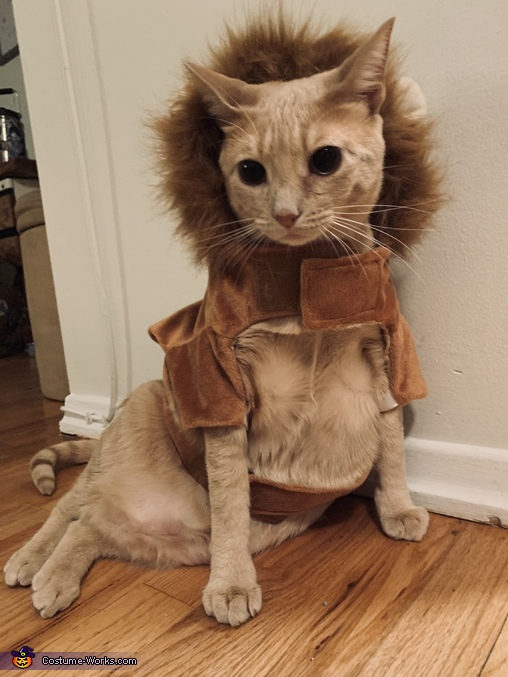 The Lion King Cat Homemade Costume