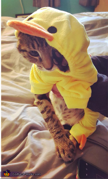 Gronk trying to set himself free, The Little Ducky Costume