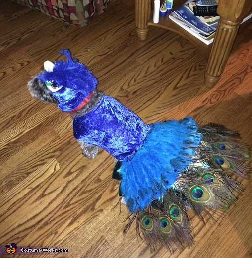 The Peacock Pooch Costume