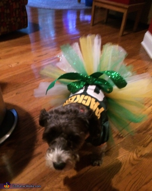 I'm a Packers fan so Clemmie's a Packers fan!, The Peacock Pooch Costume