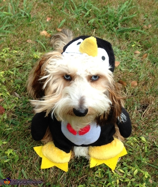 The Perky Penguin Costume