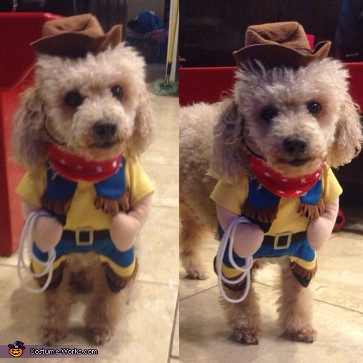 The Poodle Cowboy Costume