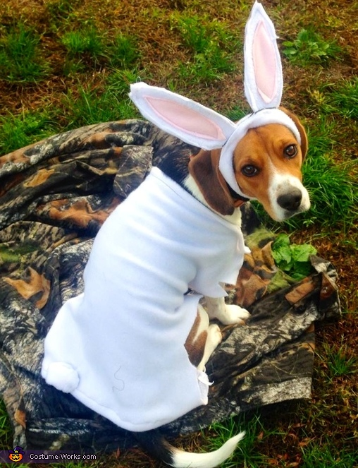 The Rabbit Dog Costume