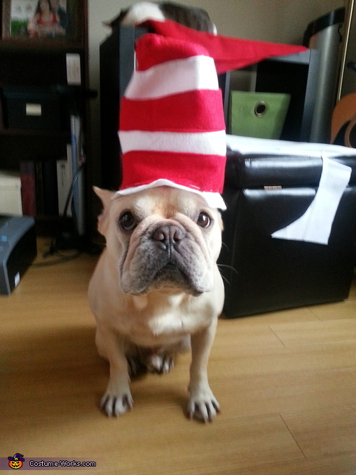 Photo #4: Hugo the Frenchi in the Hat, The REAL Cat in the Hat Costume