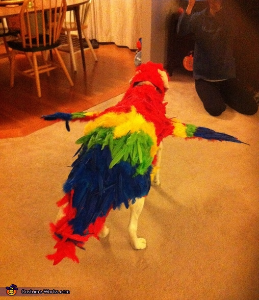 Back View, The Red Macaw Dog Costume