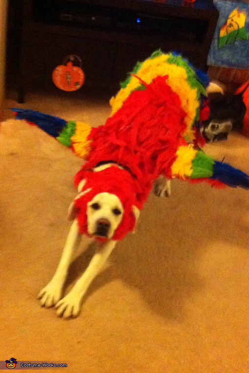 Flying Position, The Red Macaw Dog Costume