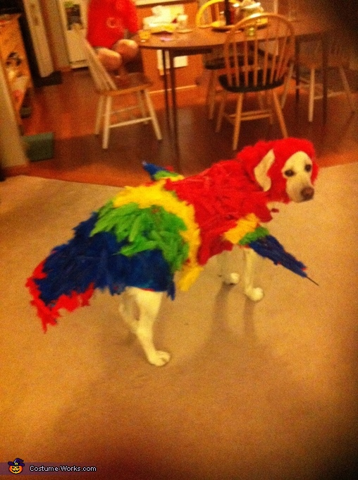 Side View, The Red Macaw Dog Costume