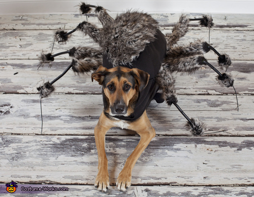 The Spider Costume & The Spider Dog Costume