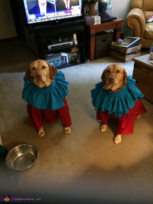 Thing 1 & 2  face view, Thing 1 & 2 Dogs Costume