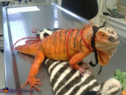 iguana tiger, Tiger Iguana Costume