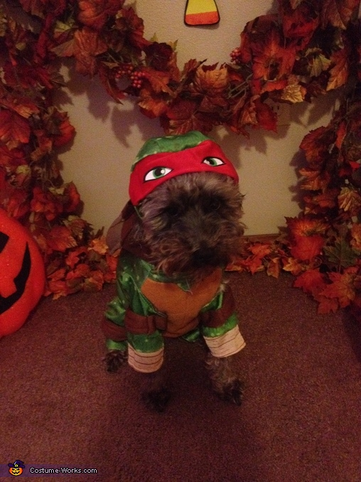 Wayne ready for anything, TMNT Dogs Costume