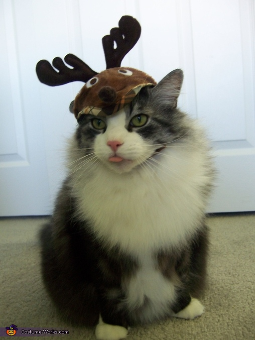 Toby the Reindeer,  Birthday boy Toby Costume