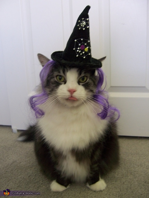 Halloween Birthday boy Toby - Homemade costumes for pets