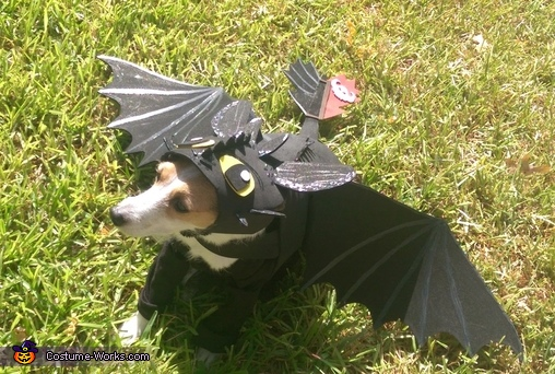 Khaleesi as Toothless, Toothless Dragon Dog Costume