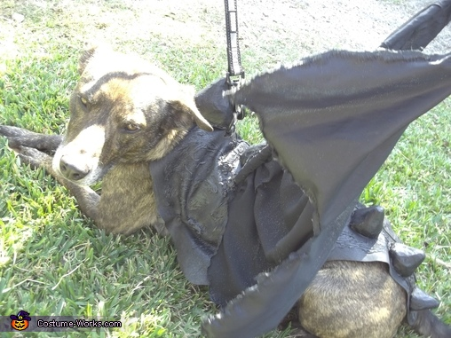 Sargent Dragon in the sun, Toothless Dragon Dog Costume