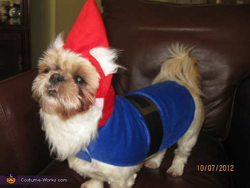 Travelocity Gnome - Homemade costumes for pets
