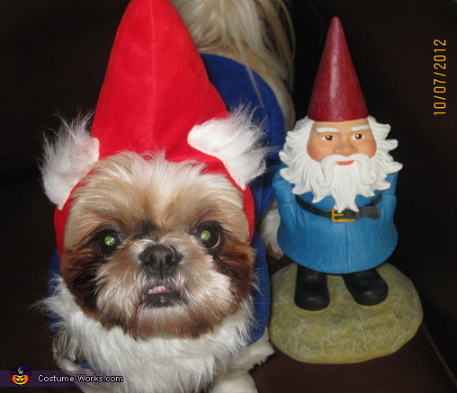 Travelocity Gnome Costume for Dogs