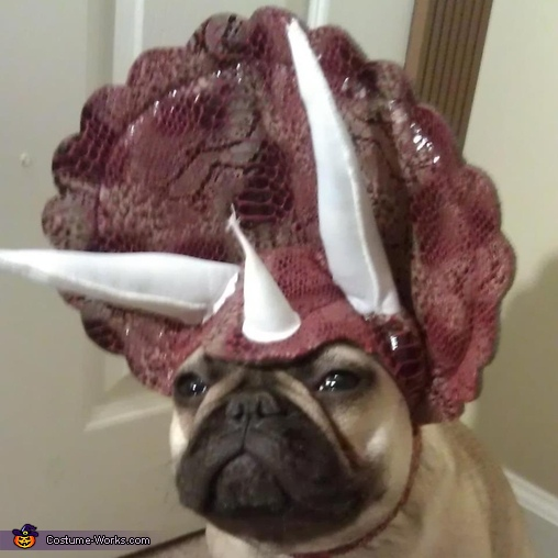 Triceratops Dog Costume