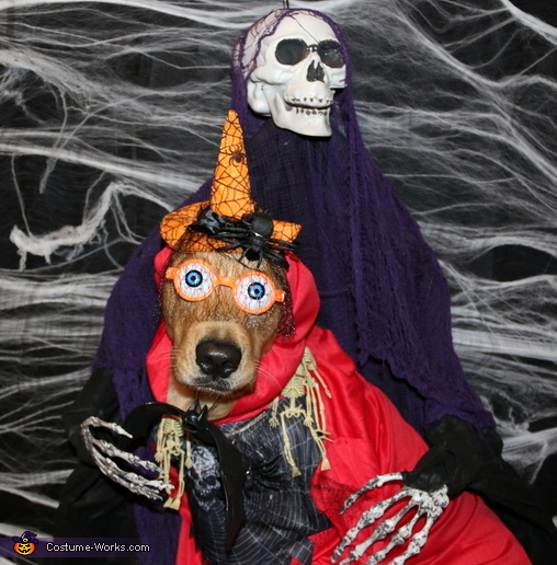 Tricks for Treats Dog Costume