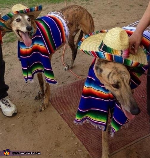 Two Amigos Dogs Costume