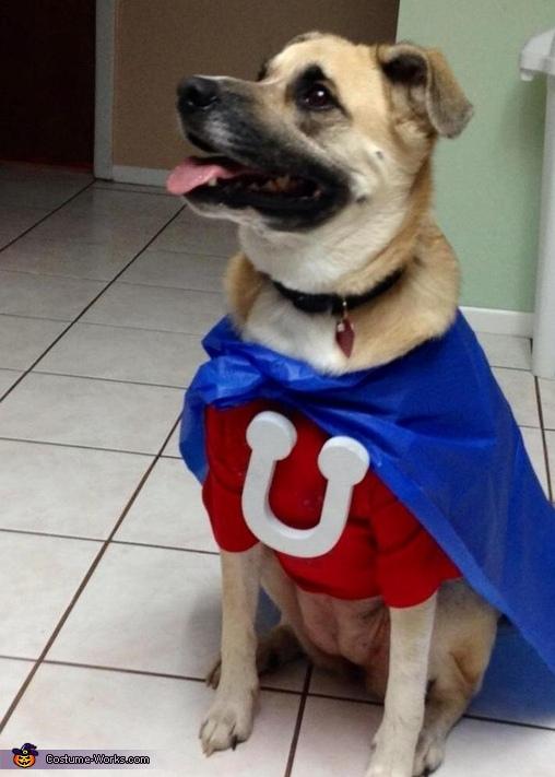 Halloween Costume For Dogs Homemade
