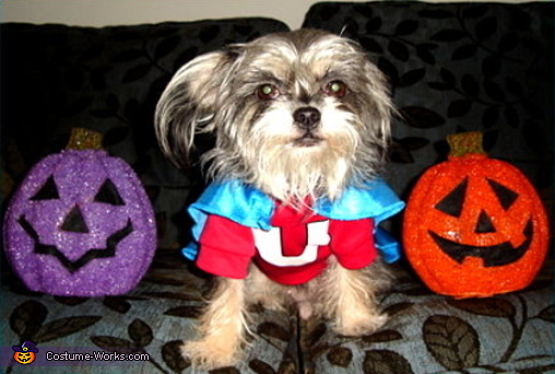 The Underdog - Homemade costumes for pets